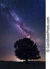 solitaire, arbre, laiteux, manière, sans nuages, nuit