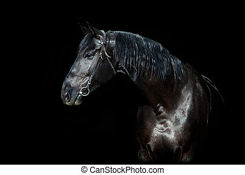 Black horse isolated on black