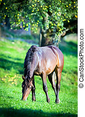 Horse eating grass in pasture