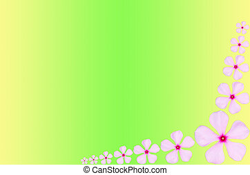 Pink periwinkle flower backgrround - Pink periwinkle flower...