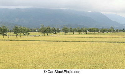 Rural scenery of green farm under n