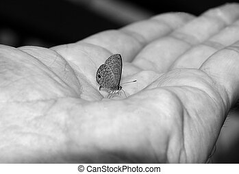 Fragile - Small Butterfly in Hand Palm, Taman Negara,...