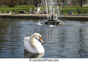 swan in hyde park in London - this is a swan in hyde park in...