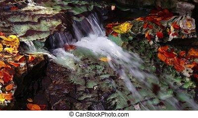 Autumn Stream Loop