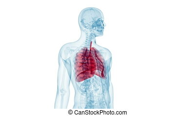 Human lung - Animation showing the human lung