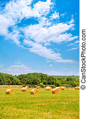 Hay round bale greenfield cereal plants in sunny day - Hay...