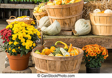 Gourds and flowers in fall display - Fall harvest display...