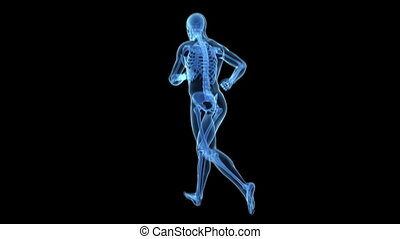 X-ray - transparent jogger - Animation showing a x-ray -...