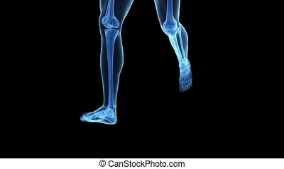 Jogger with visible skeleton - Animation showing a jogger...