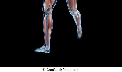 Jogger with visible muscles - Animation showing a jogger...
