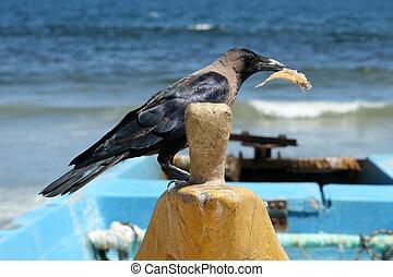 Wooden Boat - Marina Beach, Chennai, India - Marina Beach,...