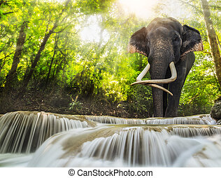 Erawan Waterfall with an elefhant, Kanchanaburi, Thailand