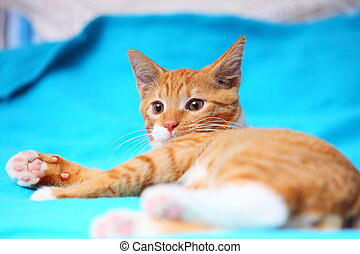 Animals at home - red cute little cat pet kitty on bed -...
