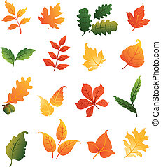 Colourful autumnal leaves set isolated on white background...