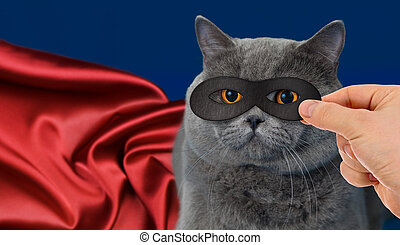 super-hero cat  - super-hero cat