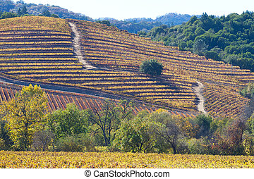 fall at wine country - beautiful view at fall colors in wine...