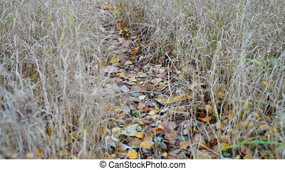 Forest path strewn with autumn leaves - Narrow path strewn...
