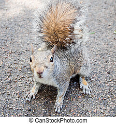 Squirrel scientific name Animalia Chordata Mammalia Rodentia...
