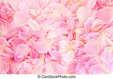 Peony Petal Beauty - Pink peony flower petal background...
