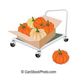 Hand Truck Loading Pumpkins in Shipping Box - Hand Truck or...