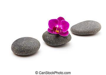 Spa stones - Spa stones and pink orchid isolated background...