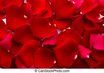 Rose petals. - Rose petals background.