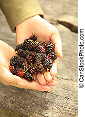 Handful of Berries - Handful of Mulberry Berries Fresh and...