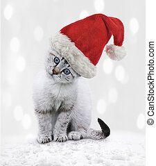 Young Cat In A Christmas Hat - Young White Kitten In A...