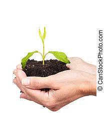 mujer, Manos, verde, planta