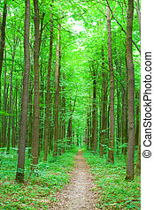 nature - green nature. forest in summer