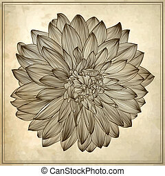 drawing of dahlia flower on grunge background. Element for...