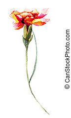 Beautiful Clove flower, watercolor illustration