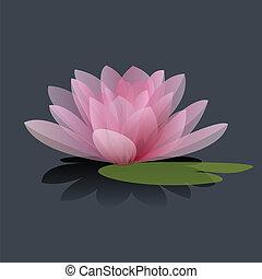 lotus, fleur, vecteur,  Illustration