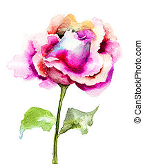 Beautiful Rose flower, watercolor illustration