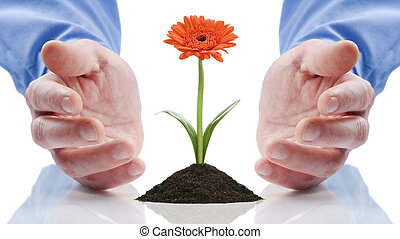 flower - business men holding a flower between hands on...
