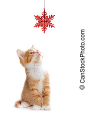 Cute Orange Kitten Playing with a Christmas Ornament on...