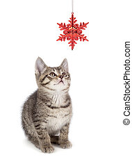 Cute Striped Kitten Playing with a Christmas Ornament on...
