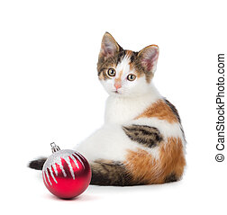 Cute calico kitten sitting next to a Christmas Ornament...