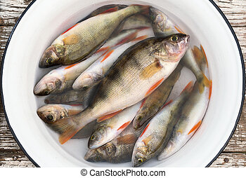 Fresh perch in a white basin on wooden stool - Fresh perch...