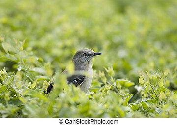Little bird - Curious little bird all surrounded by green...