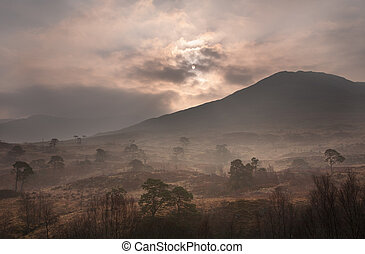 scottish dawn - Remains of a Scottish Caledonian Forest in...