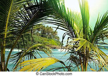 tropicais, ilha