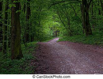 神秘主義である, 暗い, 森林, 道