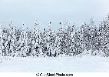 Landscape of trees in forest covered with snow