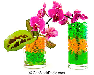 orchid and plants in glass with hydrogel - pink orchid...