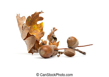 Autumn - Acorns - Still-Life with Leafs - Isolated on White...