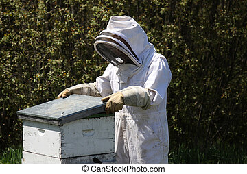 Bee keeper tending a hive - A bee keeper tends his hive in...