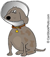 Dog with a head cone - This illustration depicts a brown dog...