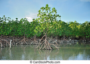 Mangrove Tree on the sea