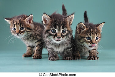 group of three little kittens together - Group of three...